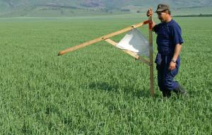 Аренда земли у государства: как взять ее подведение сельского хозяйства в 2020 году