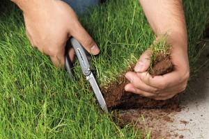 Как по кадастровому номеру узнать собственника земли